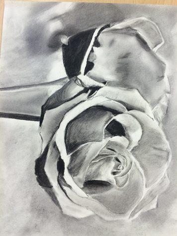 Drawn by Allina Molinaro