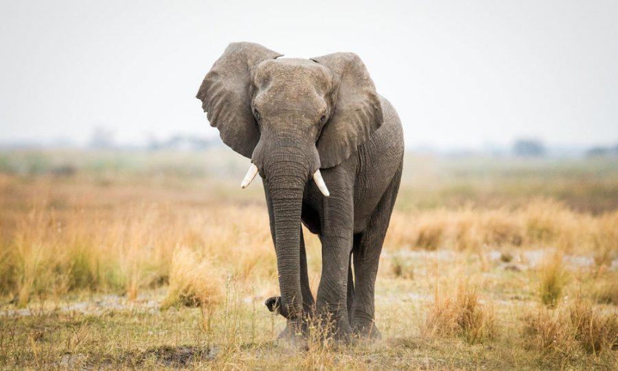 Save+the+Elephants